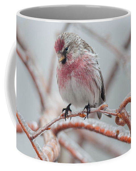 Bird Coffee Mug featuring the photograph Redpoll Shy Pose by Richard Kitchen