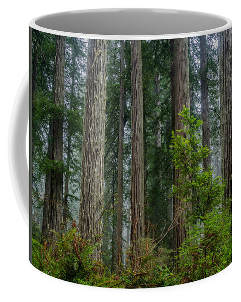 Redwoods Coffee Mug featuring the photograph Redwood Lineup by Greg Nyquist