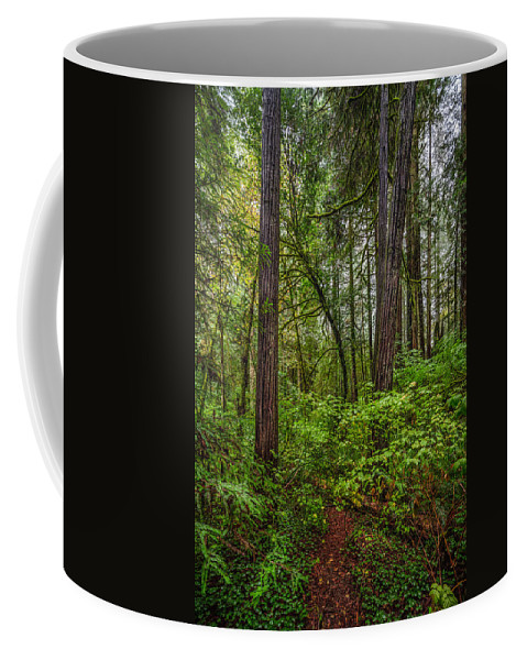 Copyrighted Coffee Mug featuring the photograph Redwoods 2 by Mike Penney
