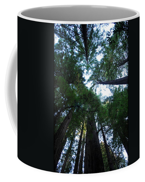 Redwoods Coffee Mug featuring the photograph Redwoods II by Kathy Sampson