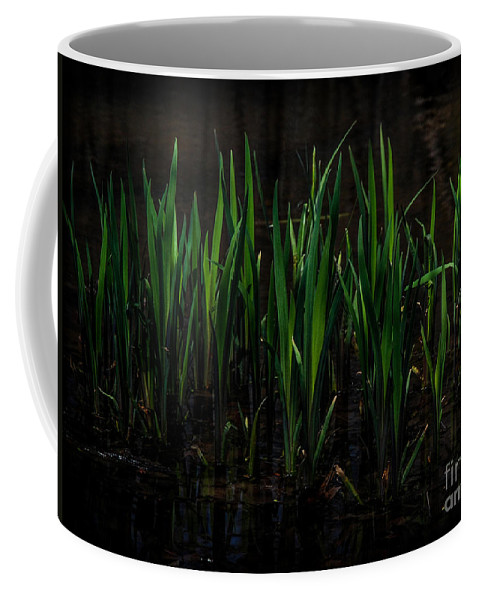 Reeds Coffee Mug featuring the photograph Reeds by Ronald Grogan
