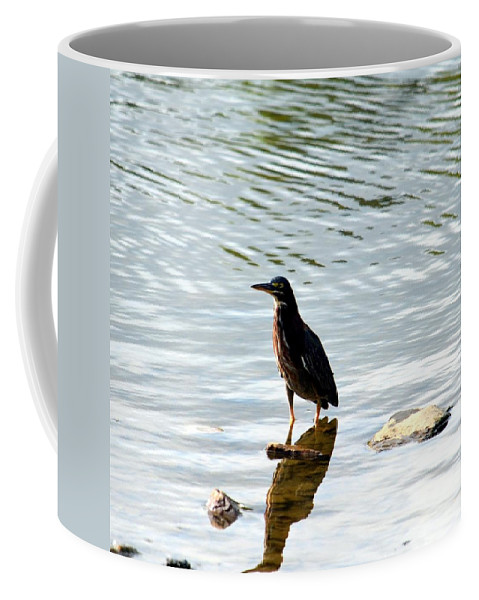 Green Heron Coffee Mug featuring the photograph Reflection Of The Green Heron by Maria Urso