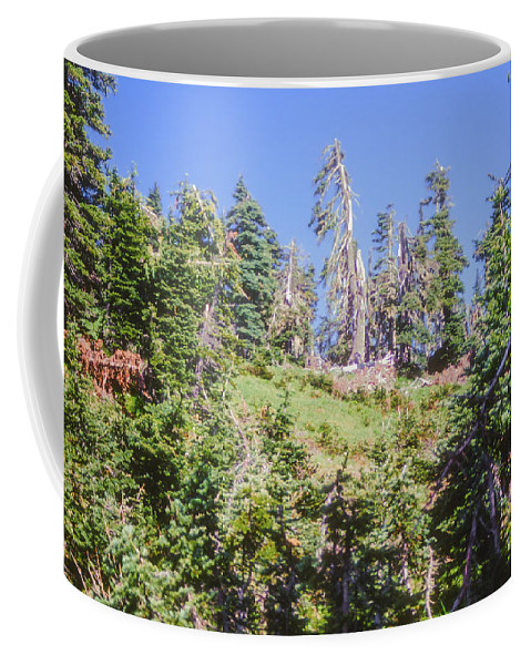 Olympic National Park Washington Parks Tree Trees Forest Forests Nature Landscape Landscapes Coffee Mug featuring the photograph Reforestation by Bob Phillips