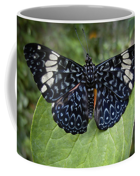 Alive Coffee Mug featuring the photograph Regal Blue Butterfly by Penny Lisowski