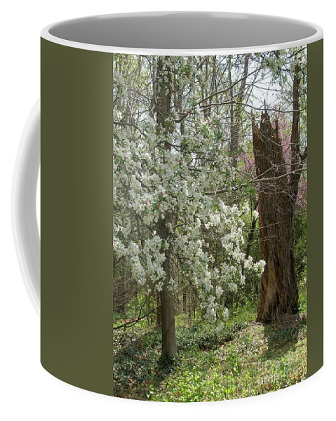 Nature Coffee Mug featuring the photograph Renew by Arlene Carmel