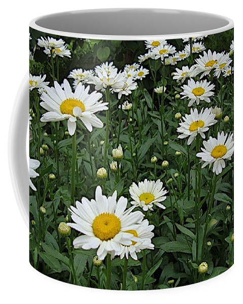 Daisy Coffee Mug featuring the photograph Requested Daisies by Joseph Yarbrough