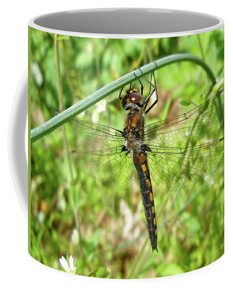Dragonfly Coffee Mug featuring the photograph Resting Brown Dragonfly by Mother Nature