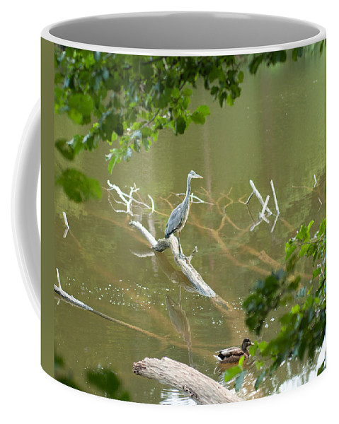 Miguel Coffee Mug featuring the photograph Resting by Miguel Winterpacht