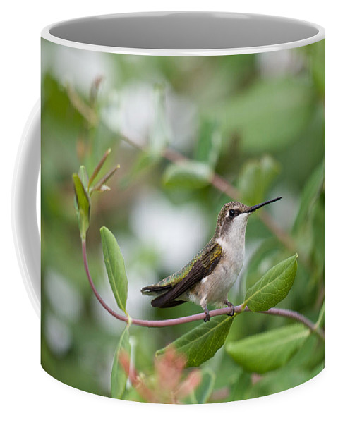 Birds Coffee Mug featuring the photograph Resting On The Honeysuckle by Kristin Hatt