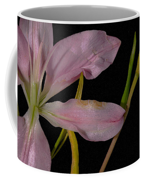 Lily Coffee Mug featuring the photograph Retiring Lily by David Stone