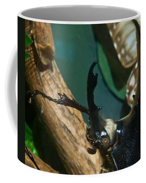 Rhinoceros Coffee Mug featuring the photograph Rhinoseros Beetle Up Close And Personal by Douglas Barnett