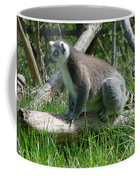 Ring Tailed Lemur Coffee Mug featuring the photograph Ring Tailed Lemur by Gary Gingrich Galleries