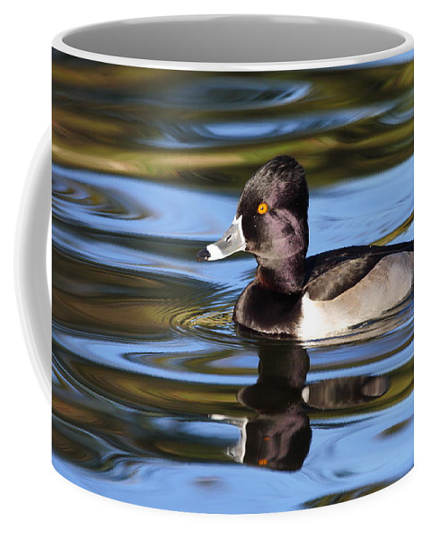 Ring-necked Duck Coffee Mug featuring the photograph Rings Around Ring-necked Duck by Andrew McInnes