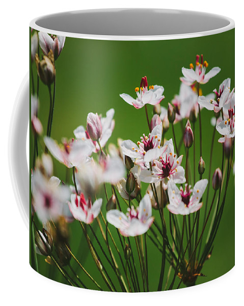 Flower Coffee Mug featuring the photograph Rising Up by Pati Photography