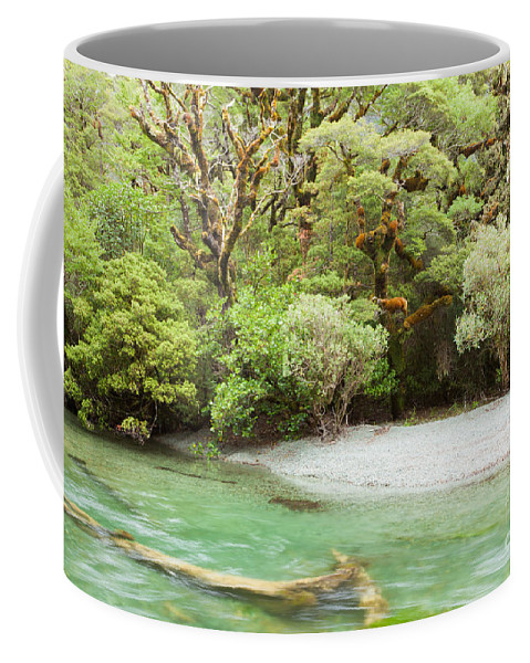 South Island Coffee Mug featuring the photograph River In Rainforest Wilderness Of Fiordland Np Nz by Stephan Pietzko