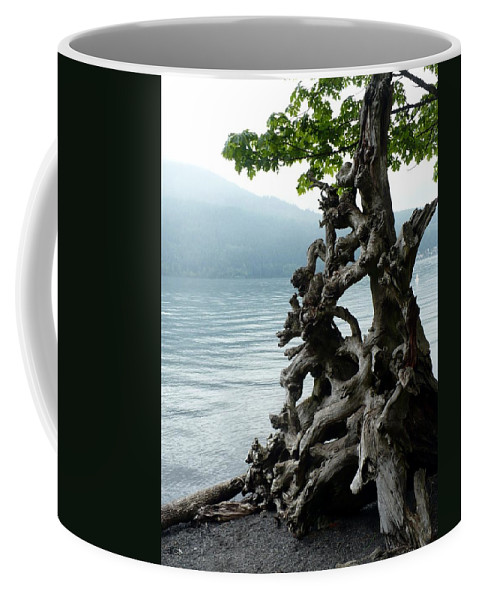 Tree Coffee Mug featuring the photograph Root Of Beauty by Nicki Bennett