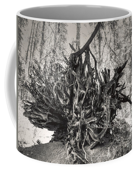 Tree Coffee Mug featuring the photograph Roots by Diego Re