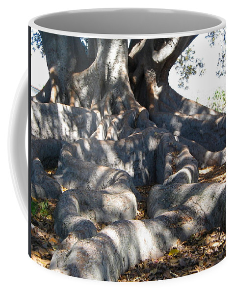 Moreton Fig Tree Coffee Mug featuring the photograph Roots Of Large Fig Tree by Denise Mazzocco