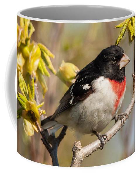 Rose Coffee Mug featuring the photograph Rose Breasted Grosbeak by Richard Kitchen