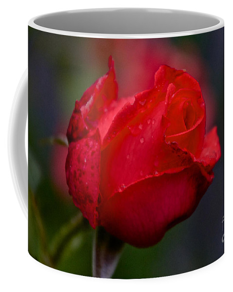 Rose Bud Coffee Mug featuring the photograph Rose Bud by William Norton