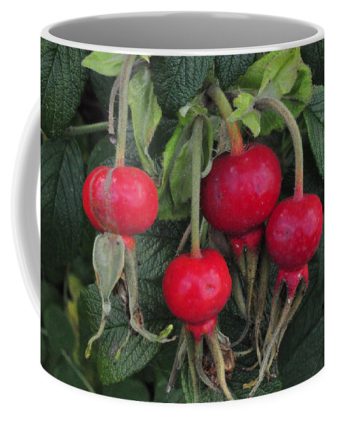 Rose Hips Coffee Mug featuring the photograph Rose Hips by Tikvah's Hope