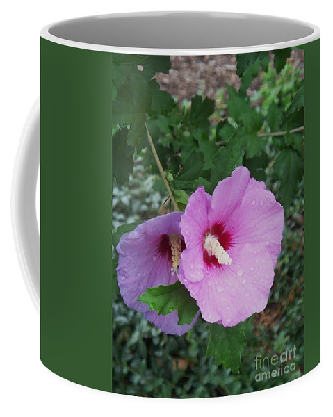 Flower Coffee Mug featuring the photograph Rose Mallow by Eric Schiabor