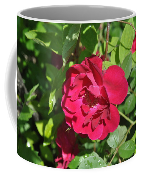 Rose Coffee Mug featuring the photograph Rose On The Vine by Verana Stark