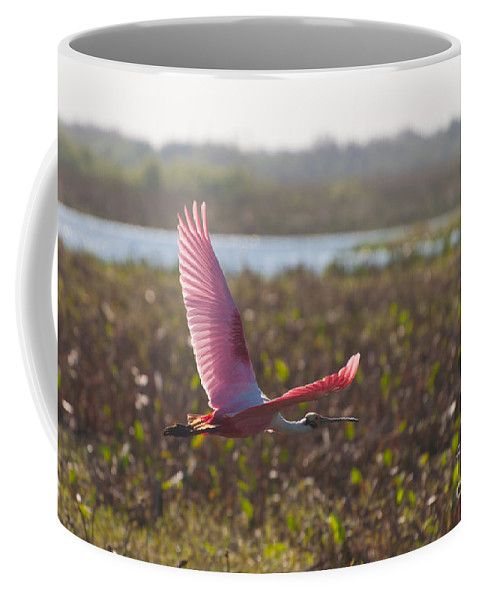 Roseatte Coffee Mug featuring the photograph Rosy Soar by Photos By Cassandra