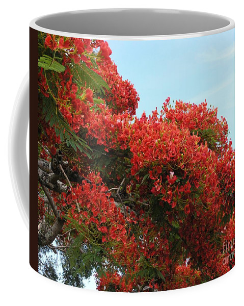 Trees Coffee Mug featuring the photograph Royal Poinciana Branch by Mary Deal