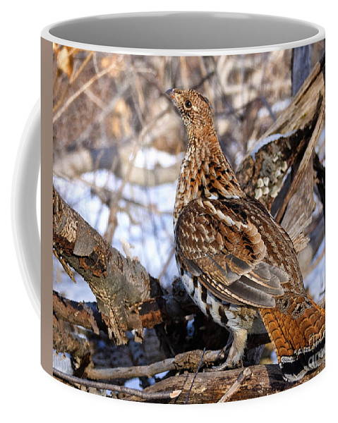 Ruffed Grouse Coffee Mug featuring the photograph Ruffed Grouse On Alert by Timothy Flanigan