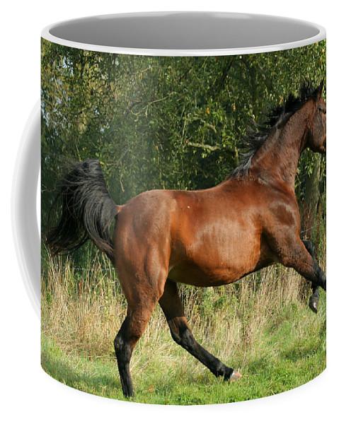 Horse Coffee Mug featuring the photograph run by Angel Ciesniarska