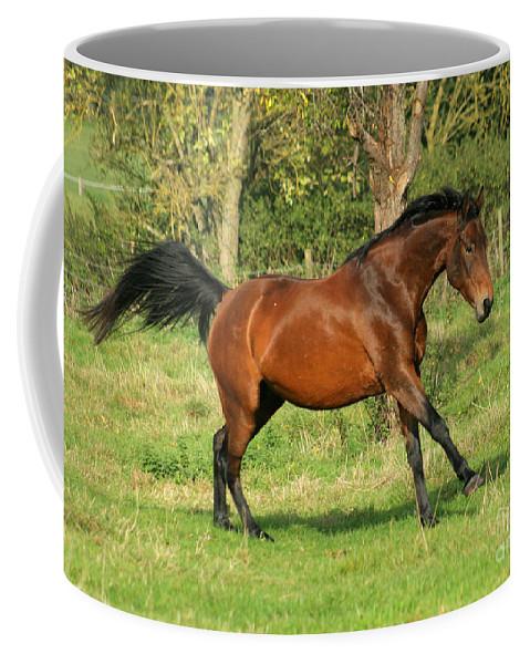 Horse Coffee Mug featuring the photograph Run Run by Angel Ciesniarska