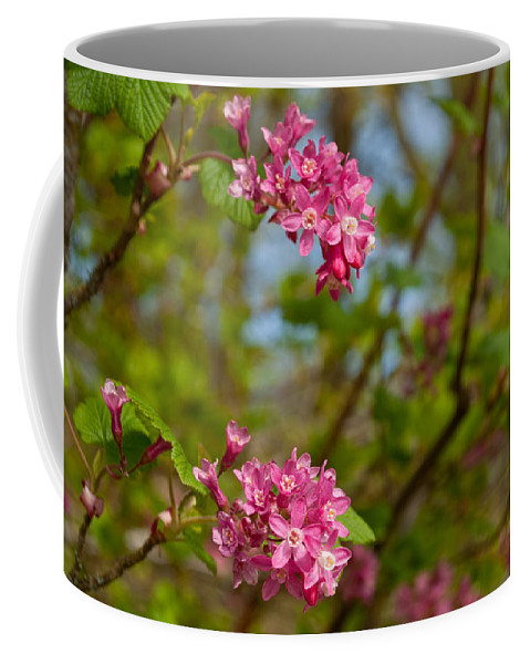 Nisqually National Wildlife Refuge Coffee Mug featuring the photograph Salmon Berry Flowers by Tikvah's Hope