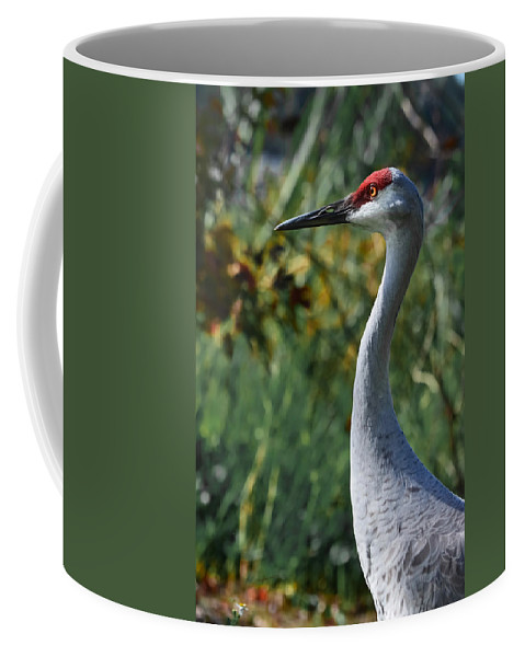 Crane Coffee Mug featuring the photograph Sandhill Crane Profile by DigiArt Diaries by Vicky B Fuller