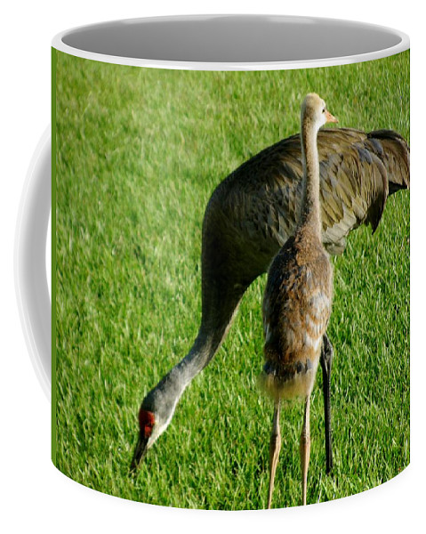 Sandhill Cranes Coffee Mug featuring the photograph Sandhill Crane With Chick II by Zina Stromberg