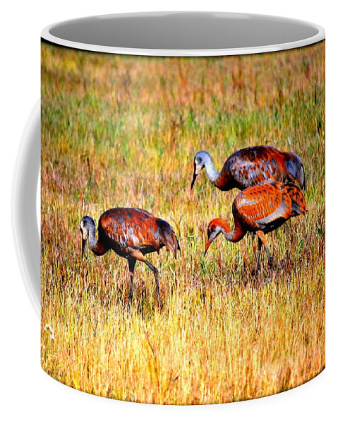 Bird Coffee Mug featuring the photograph Sandhill Family by Kathy Sampson
