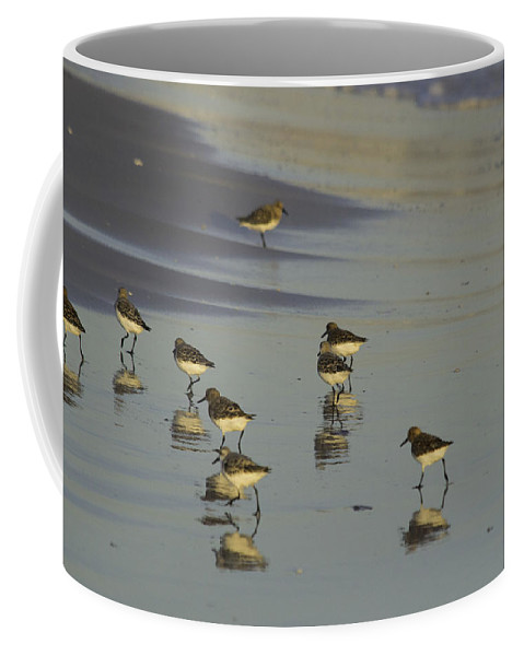 susan Molnar Coffee Mug featuring the photograph Sandpiper Sunset Reflection by Susan Molnar