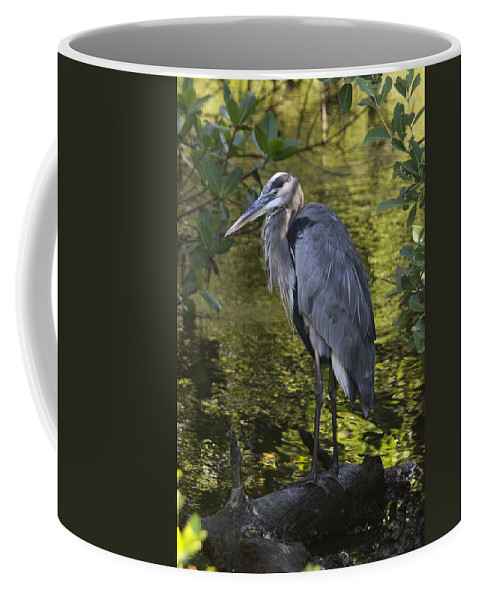 Great Blue Heron Coffee Mug featuring the photograph Sanibel Great Blue Heron by Christiane Schulze Art And Photography