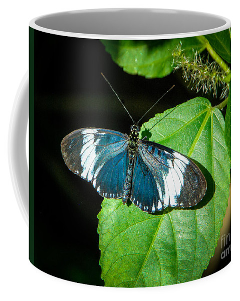 Sapho Longwing Coffee Mug featuring the photograph Sapho Longwing Butterfly by Grace Grogan