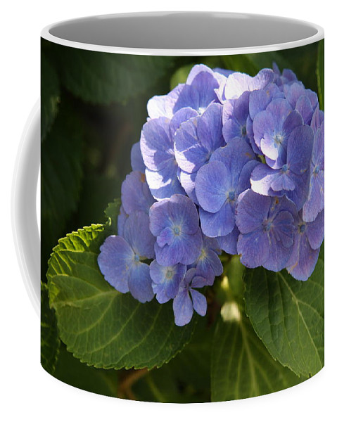 Hydrangea Coffee Mug featuring the photograph Sapphire Dream by Christiane Schulze Art And Photography