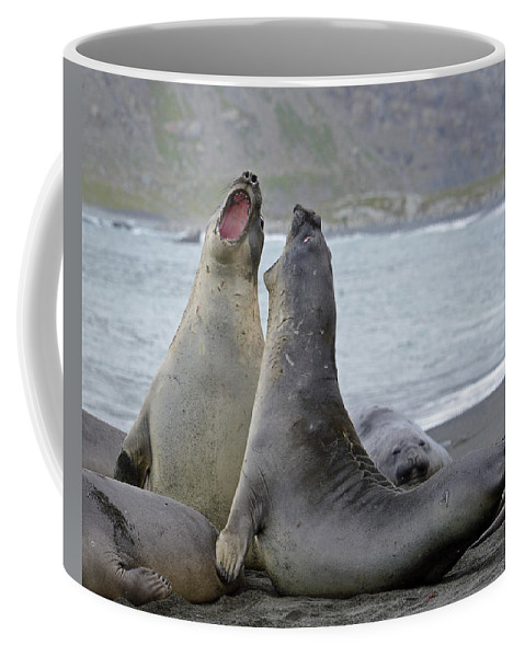 Southern Elephant Seal Coffee Mug featuring the photograph Saturday Night by Tony Beck