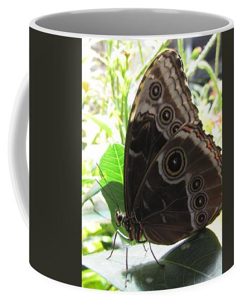 Scarce Morpho Coffee Mug featuring the photograph Scarce Morpho by Jennifer Wheatley Wolf