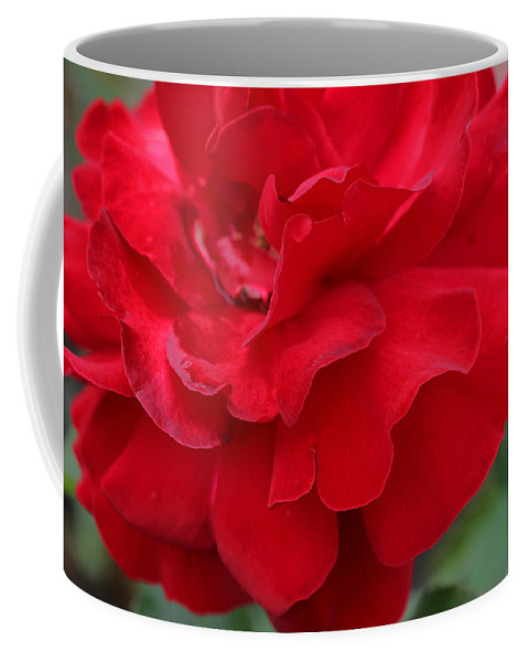 Scarlet Knight Rose Coffee Mug featuring the photograph Scarlet Knight Grandiflora Rose by Allen Beatty