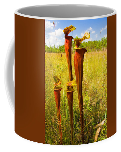 Gulf County Coffee Mug featuring the photograph Schnell's Pitcher Plant by Rich Leighton