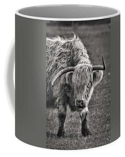 Scottish Highland Cow Coffee Mug featuring the photograph Scottish Highland Cow by Wes and Dotty Weber