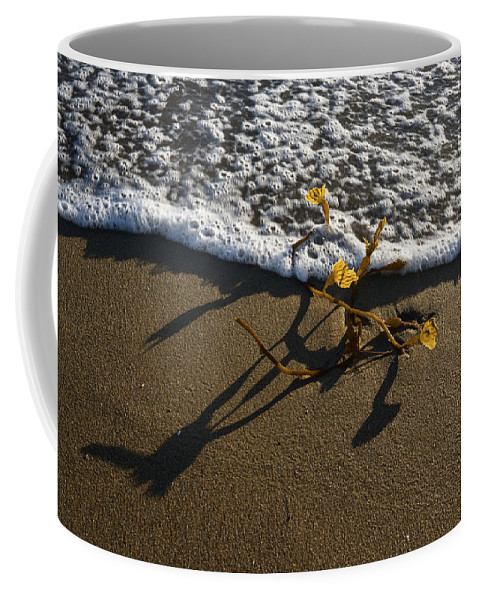 Sea Weed Coffee Mug featuring the photograph Sea Weed And A Wave by Vishwanath Bhat