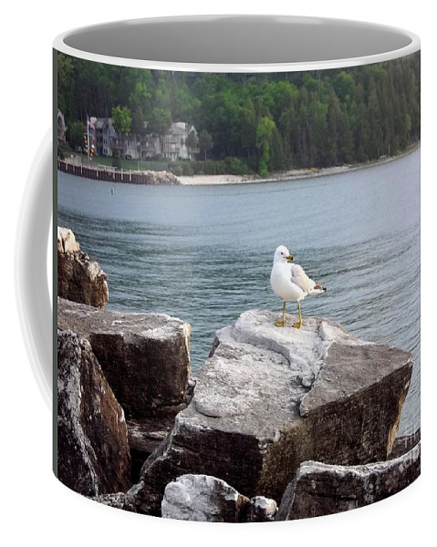 Door County Coffee Mug featuring the photograph Seagull Awaits by Deb Schense