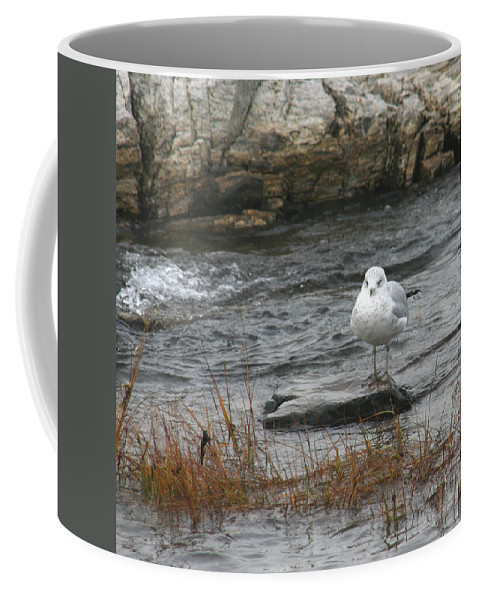 Seagull On Rock Coffee Mug featuring the photograph Seagull On Rock by Denyse Duhaime