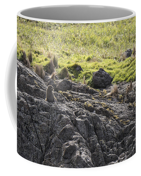 Australia Coffee Mug featuring the photograph Seal - Montague Island - Austrlalia by Steven Ralser