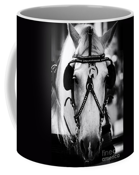 Horse Coffee Mug featuring the photograph Seaport Sweetheart by Joe Geraci